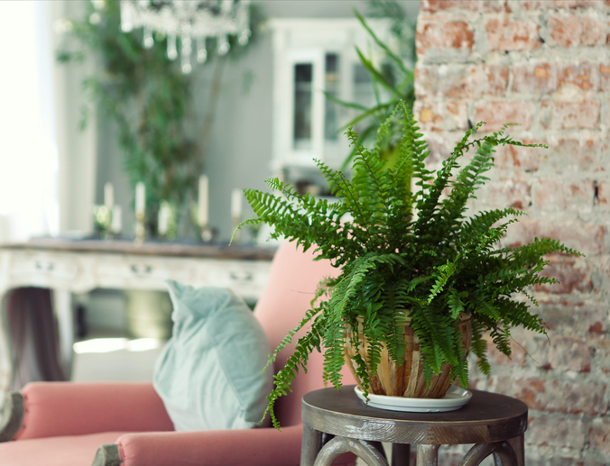 Staging to Sell Houseplants | Myrtle Beach